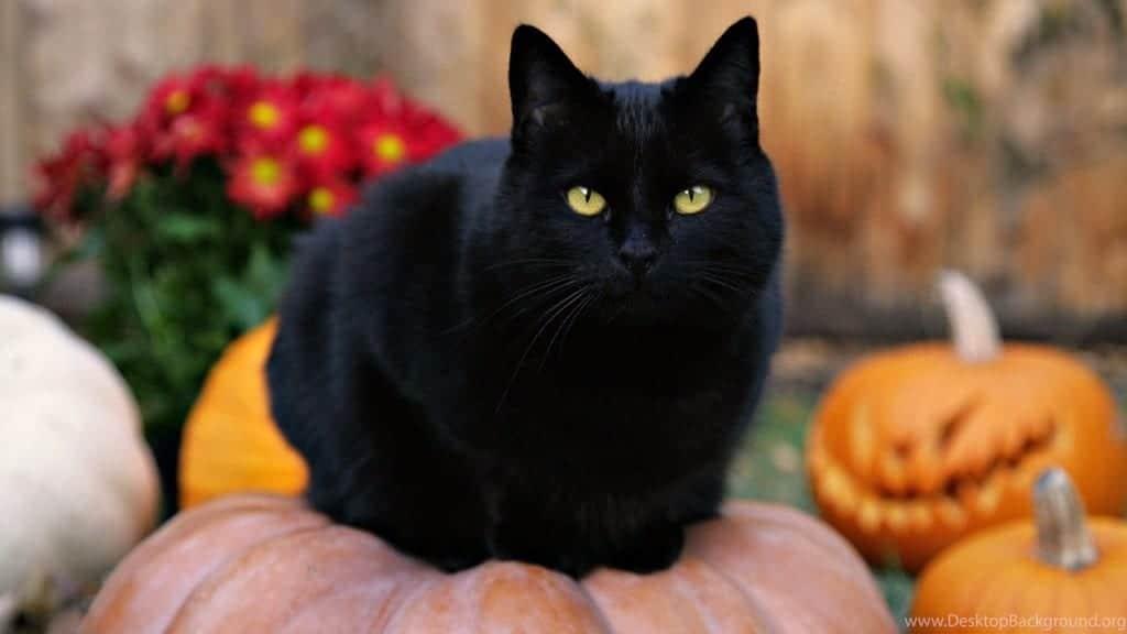 Immagini gatti Halloween