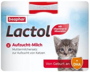 latte in polvere per gattini orfani