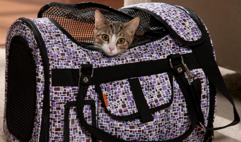 Come mettere il gatto nel trasportino abituare gatto