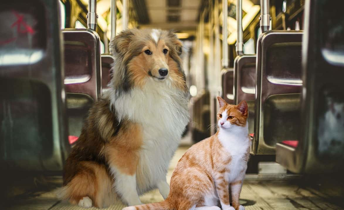 Gatti e cani in treno norme su Trenitalia e Italo