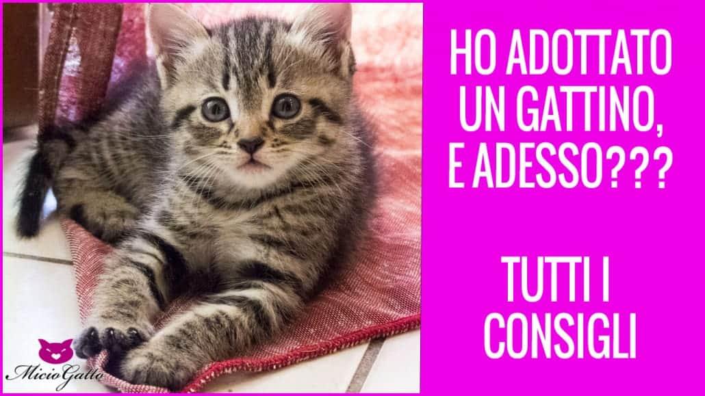 Calendario Eta Gatti.Voglio Un Gatto Step Veterinari Dei Primi Mesi Del Gattino