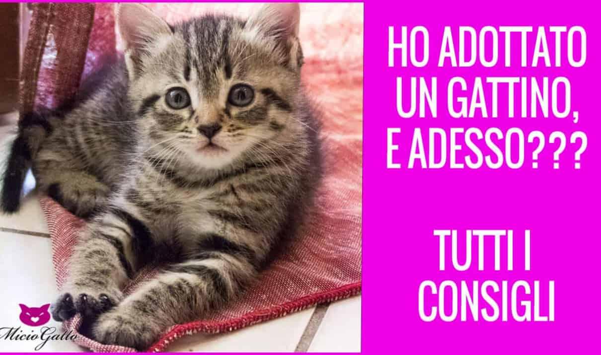 voglio gattino veterinario fasi vita gatto salute