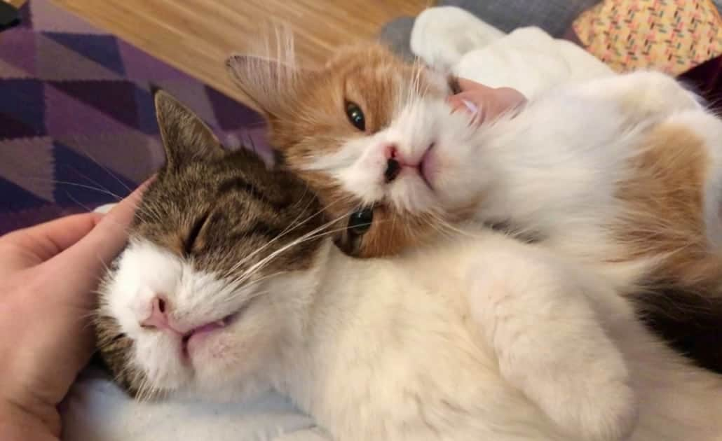 Monty e Molly gatti con sindrome di Down