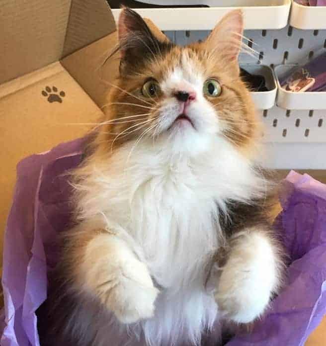 Molly gatto sindrome down