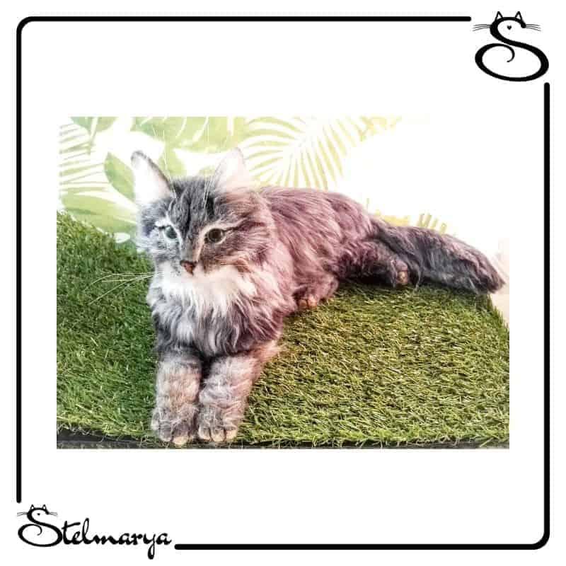 gatti in miniatura lana cardata