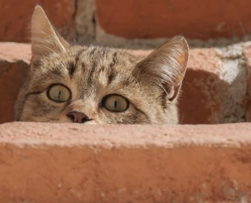 Gatto spaventato, comportamento come calmarlo