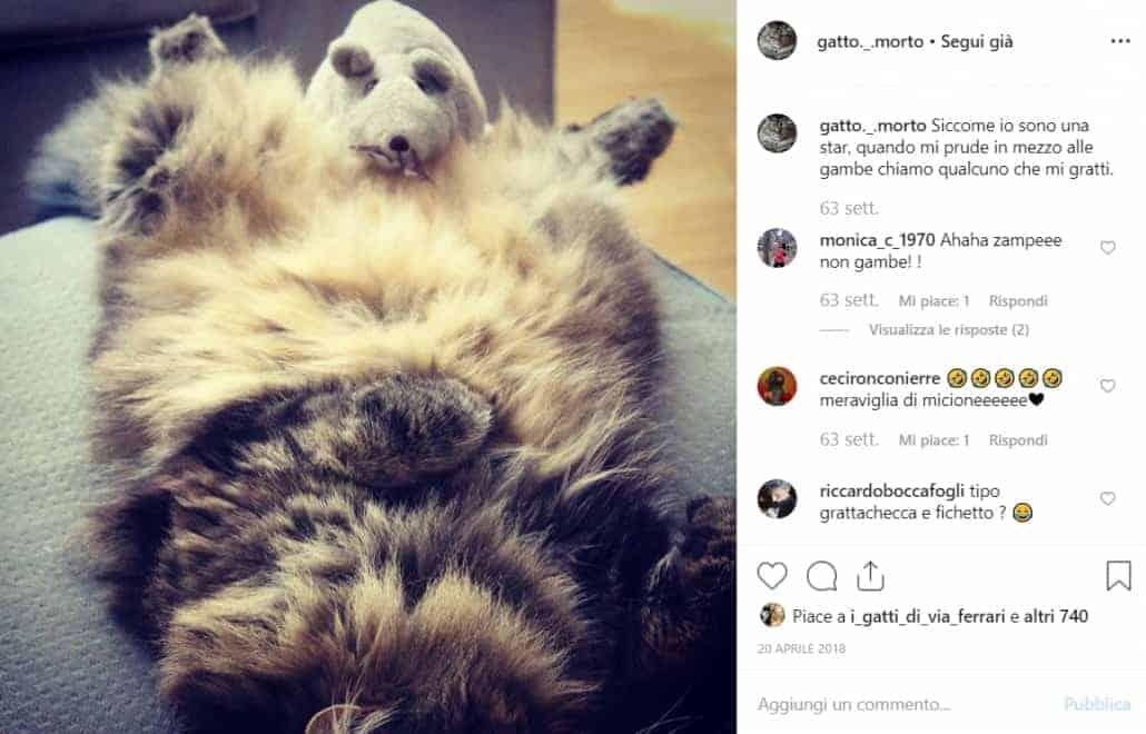 gatto Morto e topo Ikea
