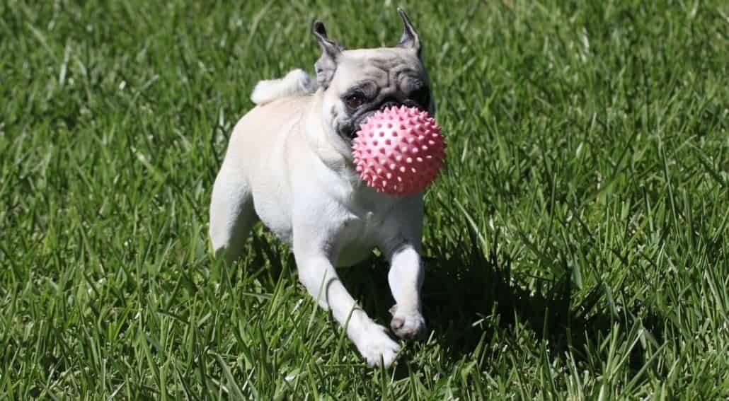 giochi educativi per cani