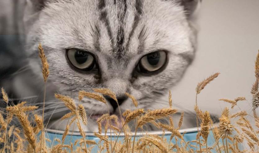 Grain free tutta la verità sul cibo per gatti senza cereali