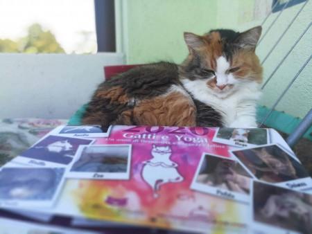Lady con calendario miciogatto