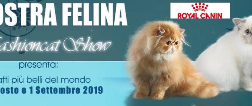 Mostra felina Anfi di Longarone 2019