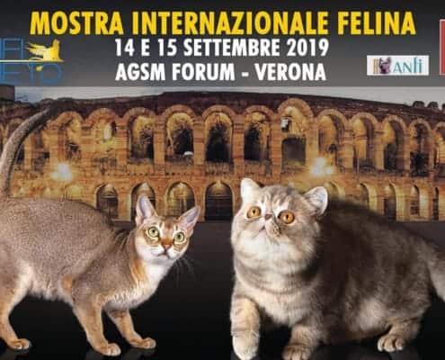 expo felina anfi verona 2019