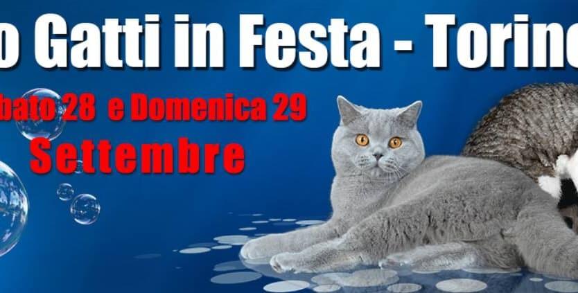 expo felina torino 2019 gatti in festa