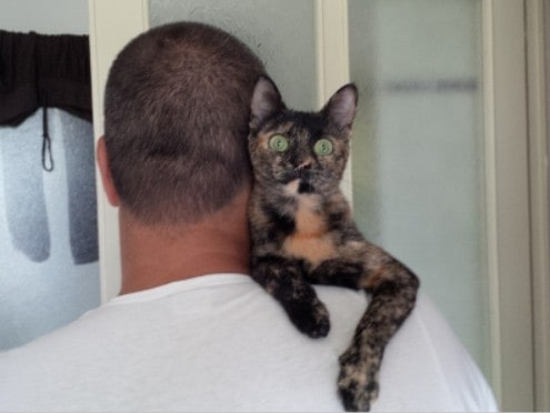 Nikita gattina salvata dall'amore dalla crudeltà umana