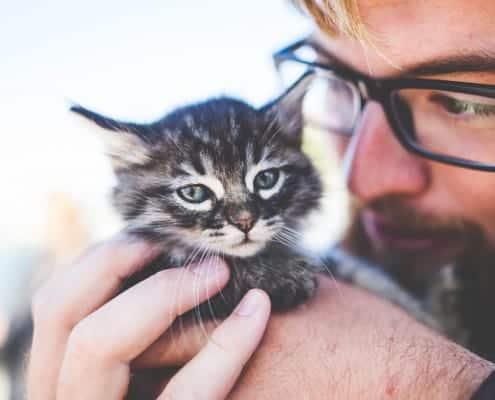 Cerchi un gattino da adottare Ecco come scegliere un gatto
