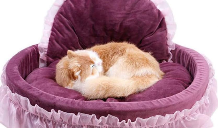 Cuscini per gatto, ecco i più belli