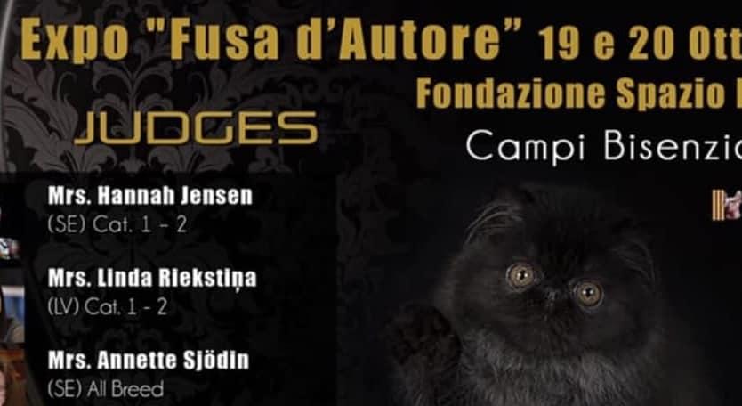 Esposizione Internazionale Felina di Campi Bisenzio Firenze 2019
