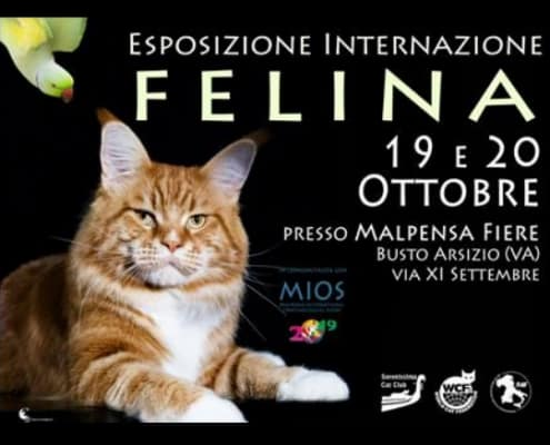 Expo felina Busto Arsizio Varese 2019