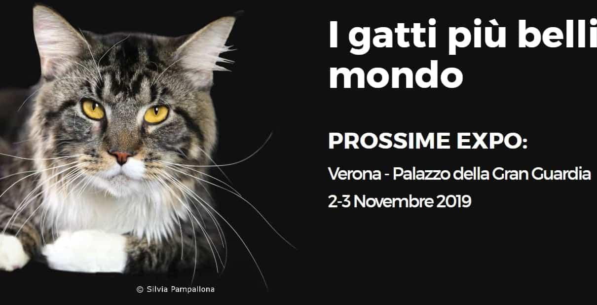 Mostra Felina Enfi Verona novembre 2019