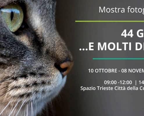 Mostra fotografica 44 gatti... e molti di più a Trieste