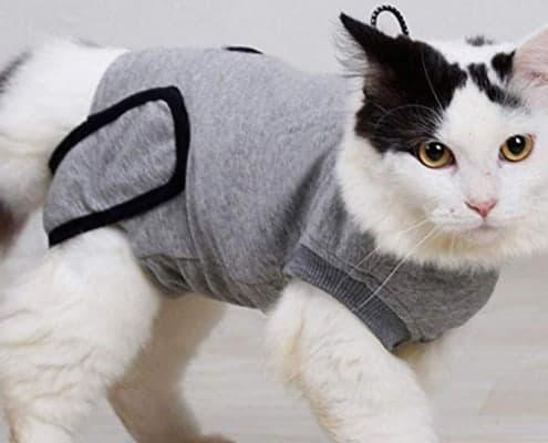 Vestiti per gatti e gattini vestiti ecco perché