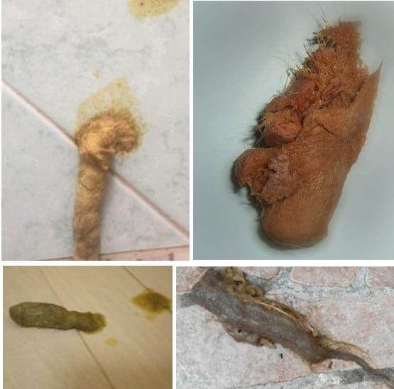 tricobezoari boli di pelo gatto
