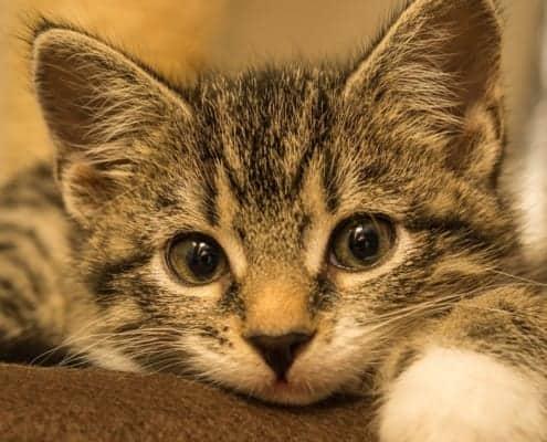 Ascaridi gatto cura terapia rimedi naturali
