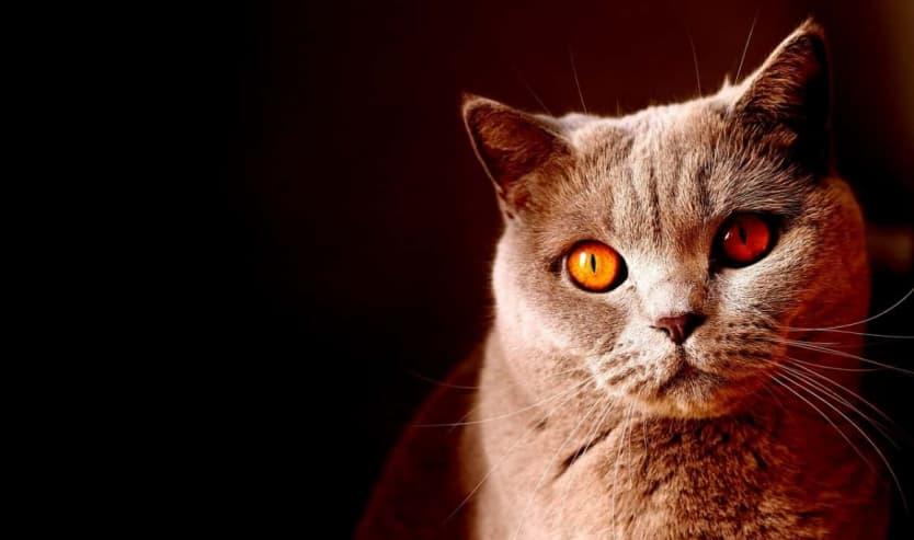 Fermenti lattici per gatto probiotici per gatti