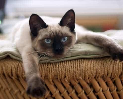 Gatto stitico sintomi rimedi stitichezza gatto