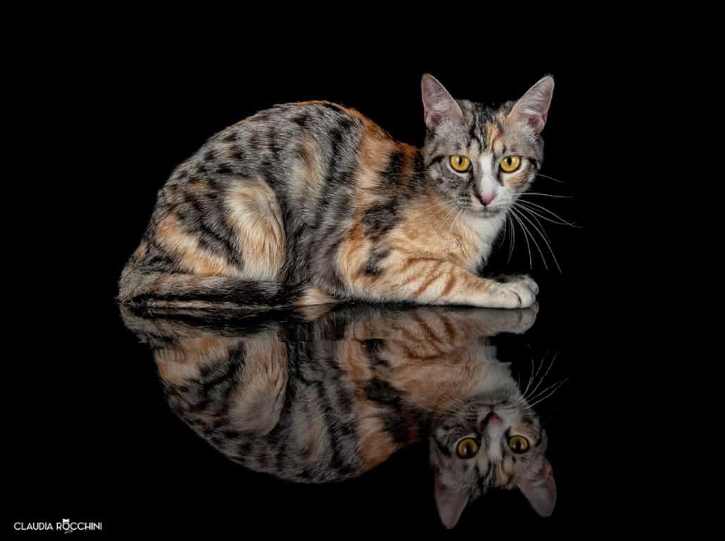 fotografare gatti claudia rocchini