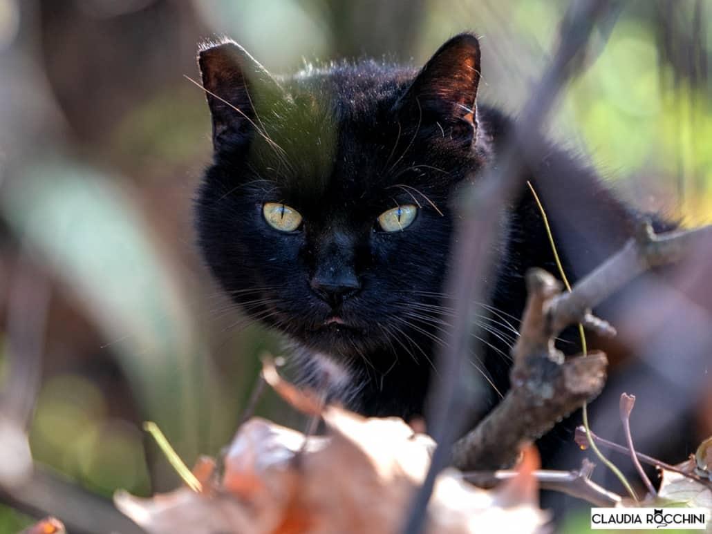 gatti selvatici claudia rocchini