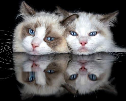 reflex cat claudia rocchini fotografare gatti