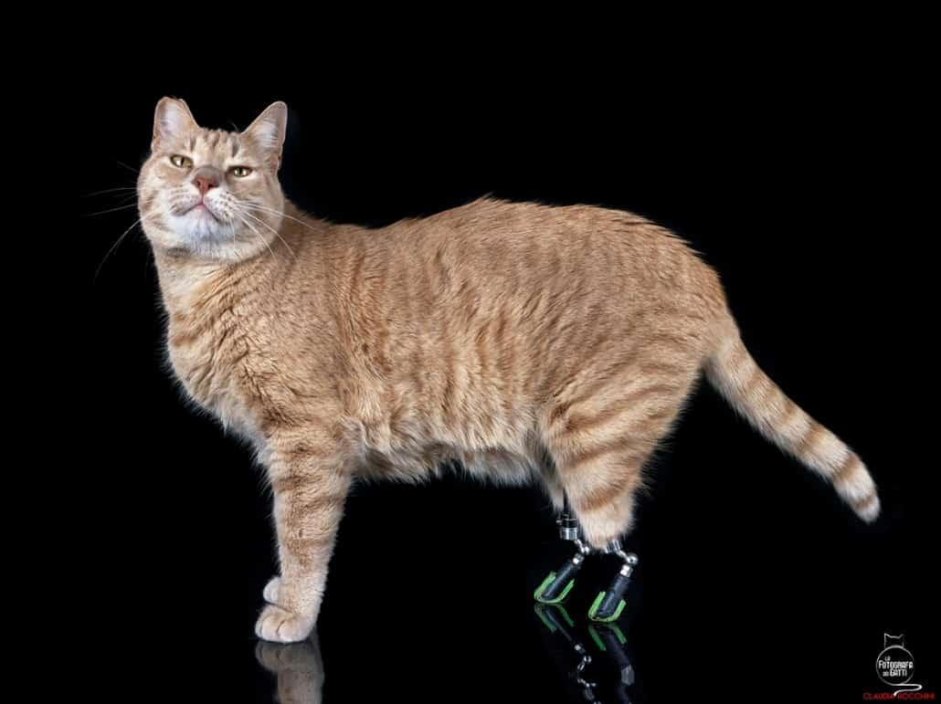 vito gatto bionico claudia rocchini