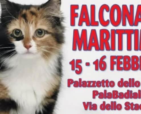 Expo felina Falconara Marittima 2020