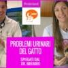 fludt gatto problemi alle basse vie urinarie imbimbo