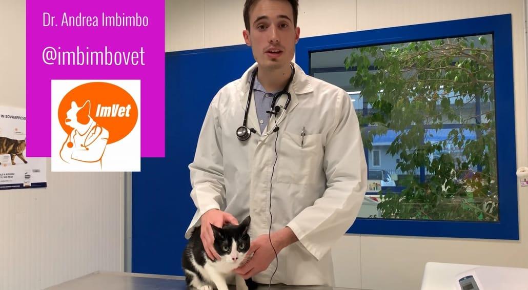 dottor imbimbo medico veterinario