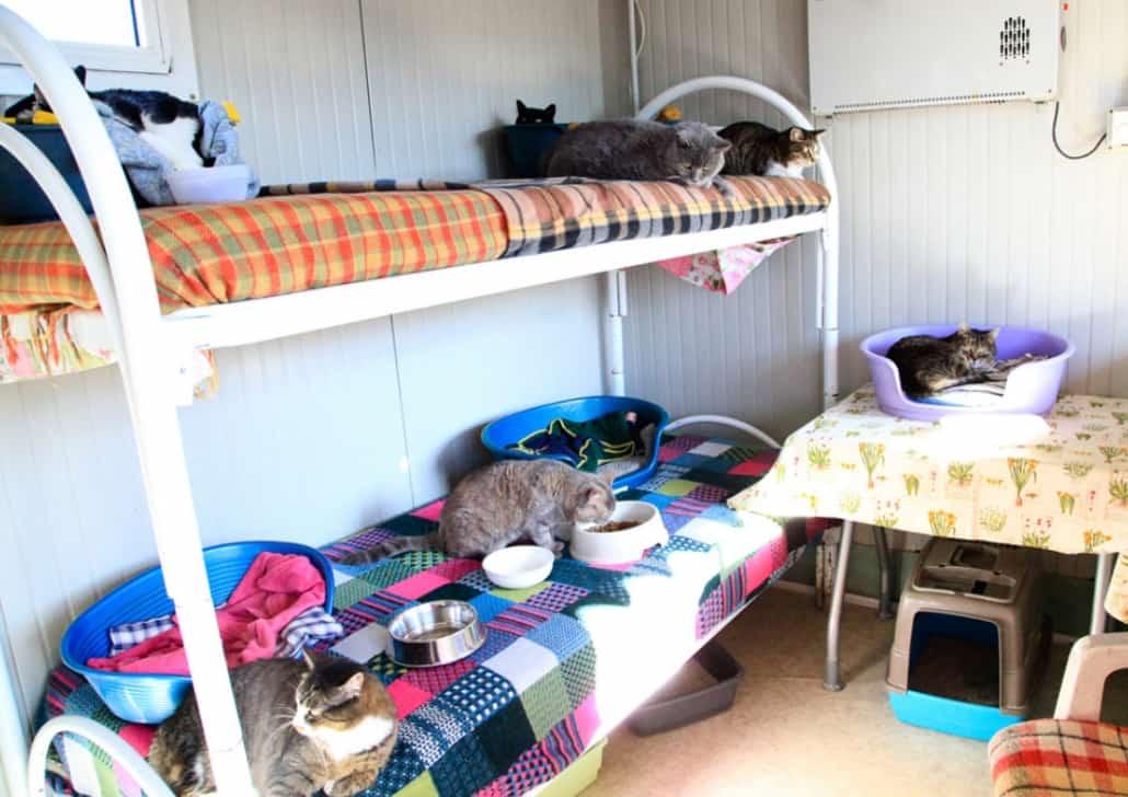 gattile mondo gatto milano