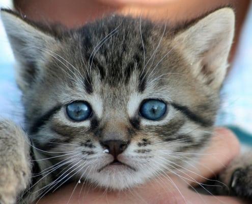 gattini guida completa