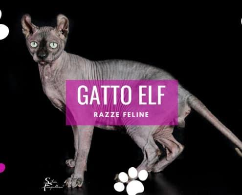 gatto elf cat