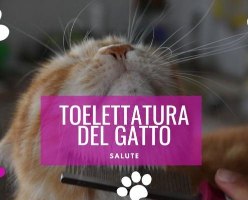 come fare la toelettatura del gatto