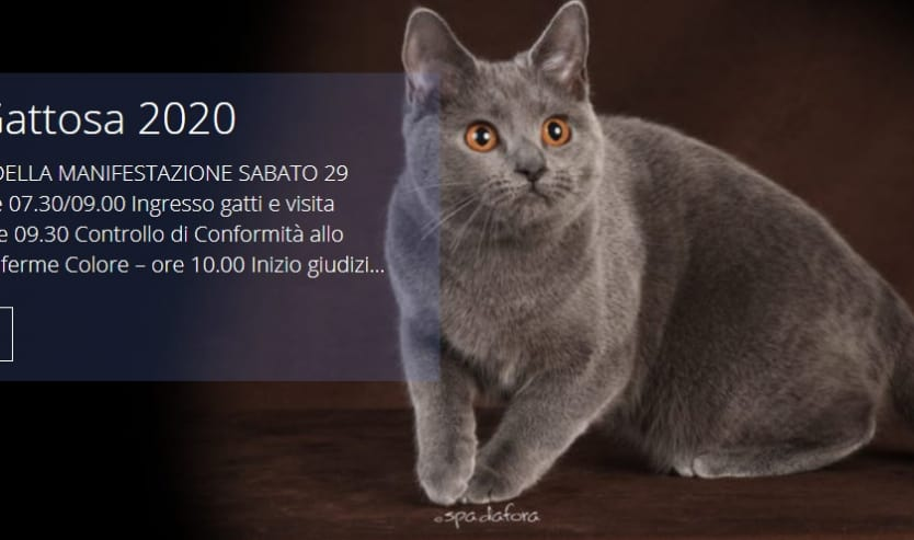 esposizione felina roma gattosa 2020