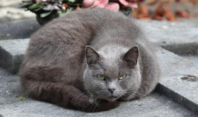 gatto erede eredità morte
