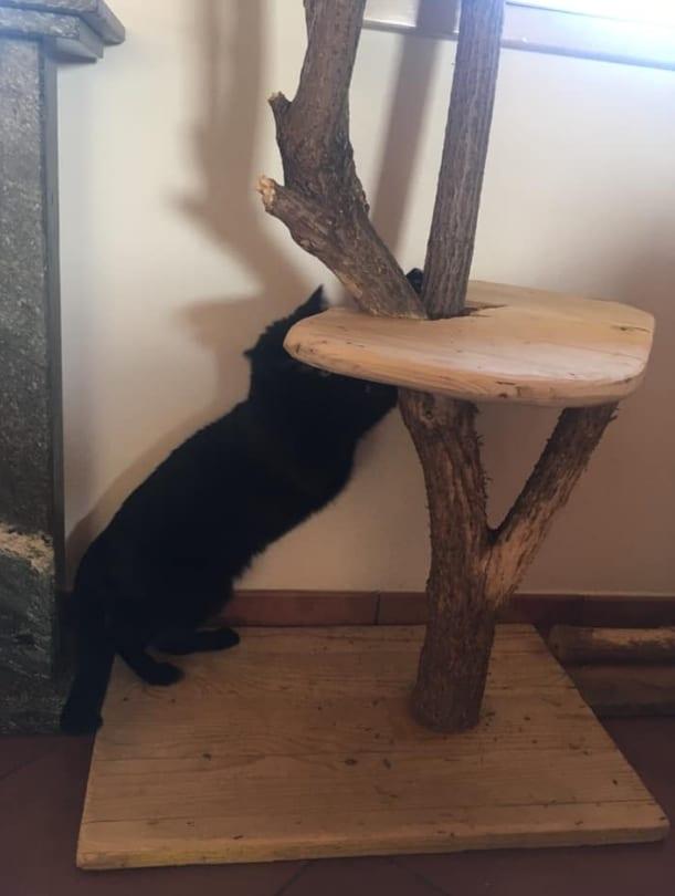albero tiragraffi fai da te