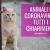 animali coronavirus enpa leggi normative vademecum