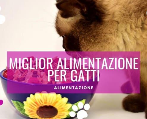 consigli miglior alimentazione per gatti