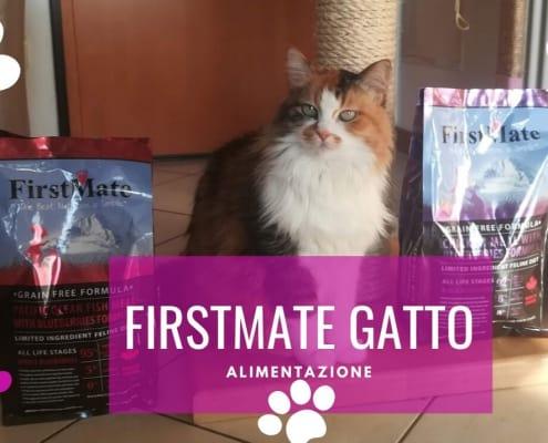 firstmate gatto