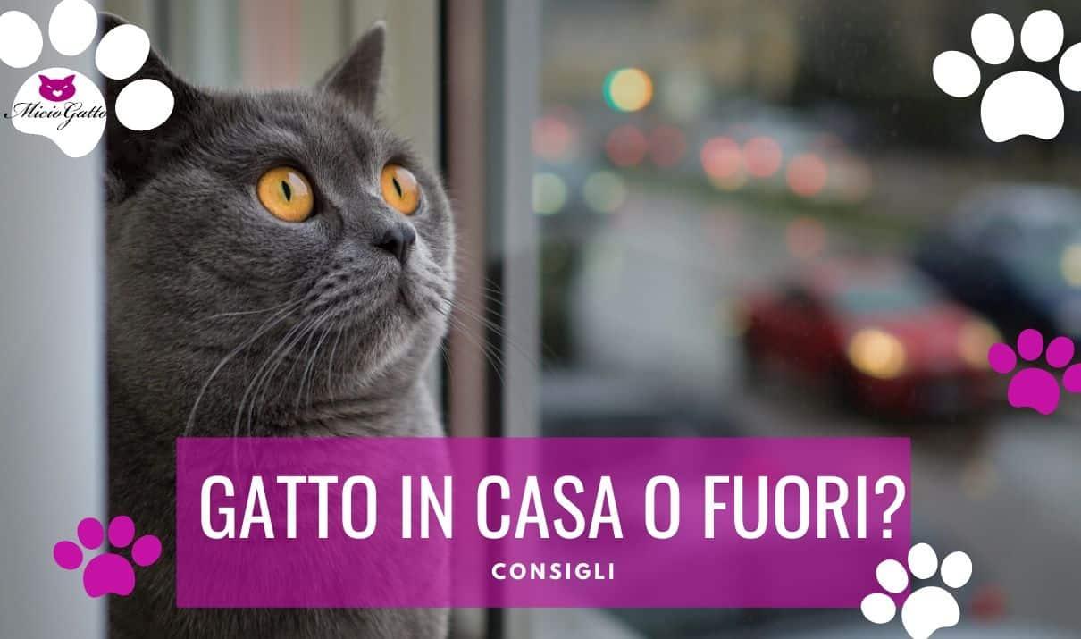gatto in casa o fuori soffre in appartamento
