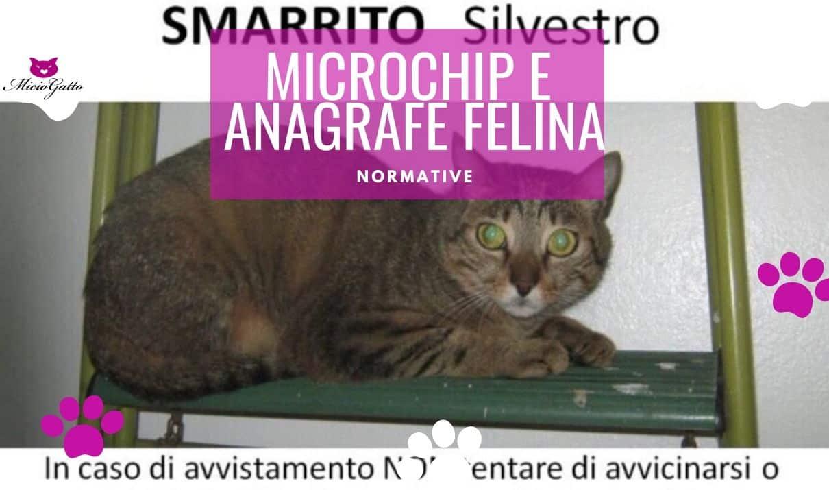 microchip gatto anagrafe felina