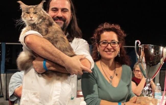 calliope gatto più bello del mondo 2019