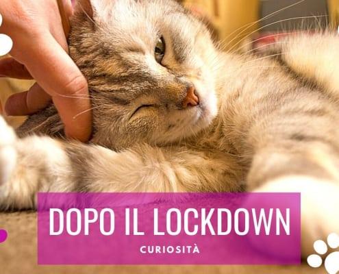 gatti dopo il lockdown covid coronavirus
